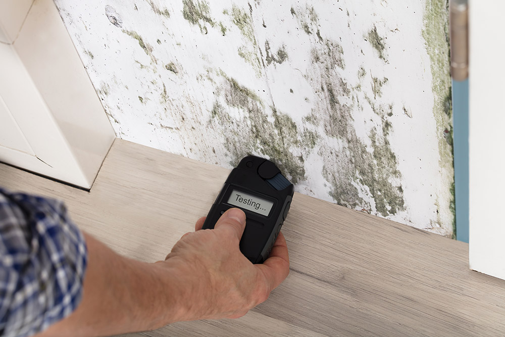Take the Right Measures to Remove Mold